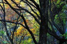 左权县龙泉森林公园美景