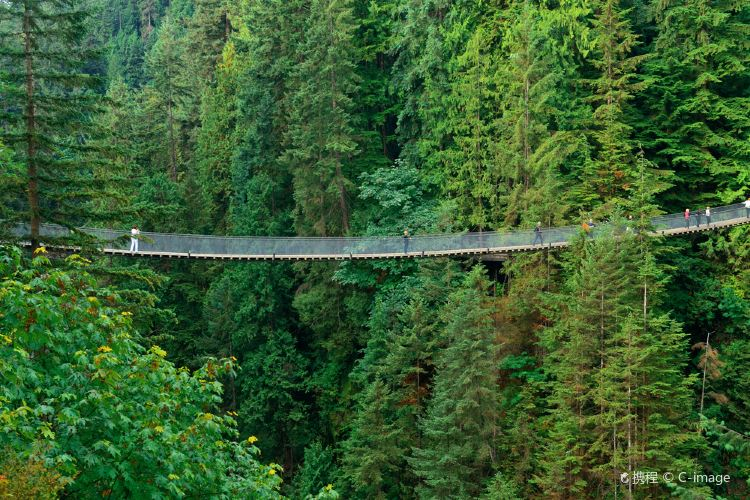 Capilano Suspension Bridge Park2