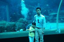 新加坡海洋馆 去过好几个海洋馆,感觉都差不多