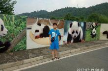 四川都江堰之熊猫乐园