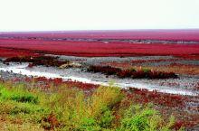 醉美红海滩