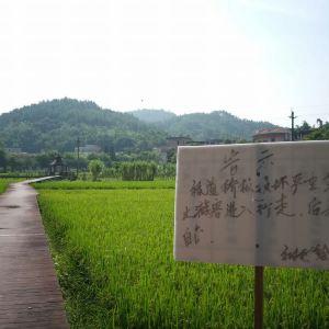 红山村旅游景点攻略图