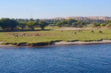 船游埃及开罗尼罗河美景