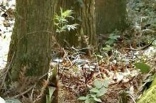 平江福寿山森林公园