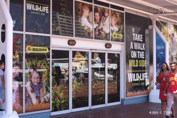 雪梨野生動物園3