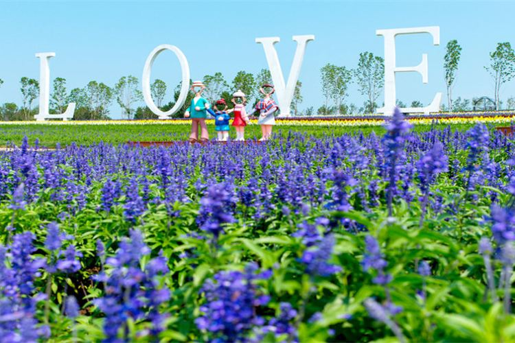 Provence Lavender Manor of Harbin2