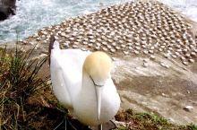 二十年前奥克兰鸟岛(胶片摄影)