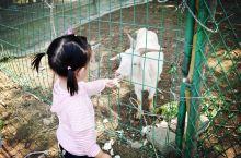 儿童节特辑(一)亲子游郊区好去处,农场采摘喂动物做手工