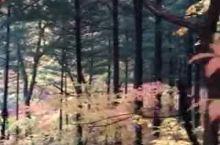 徒步枫林谷