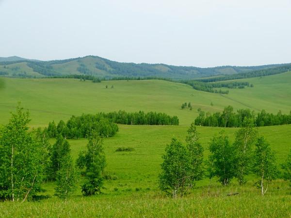 过一个25℃的夏天!呼伦贝尔大草原风景如画