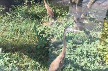 龙口动植物园一日游