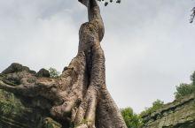 吴哥古迹 塔普伦寺 树与庙的共生