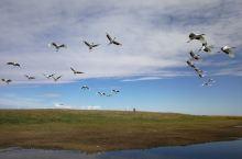 金秋,我在鹤乡——扎龙国家级自然保护区
