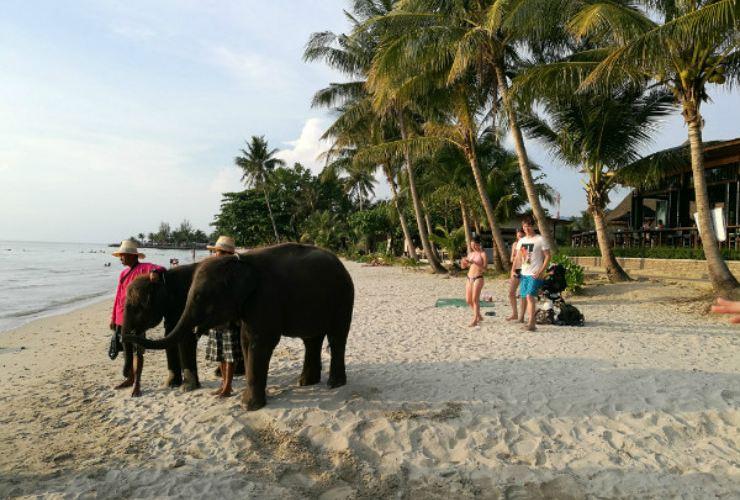 Kaibae Meechai Elephant Camp2