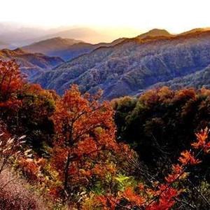渑池游记图文-秋末丨河南这10个地方的秋天美得一塌糊涂,错过遗憾一年!