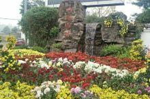 重庆园博园的菊展