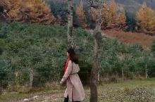 临夏康乐县莲花山森林公园,秋日的精灵。