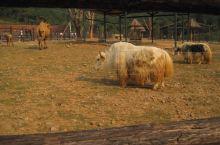 华东最大的动物主题公园?无锡动物园