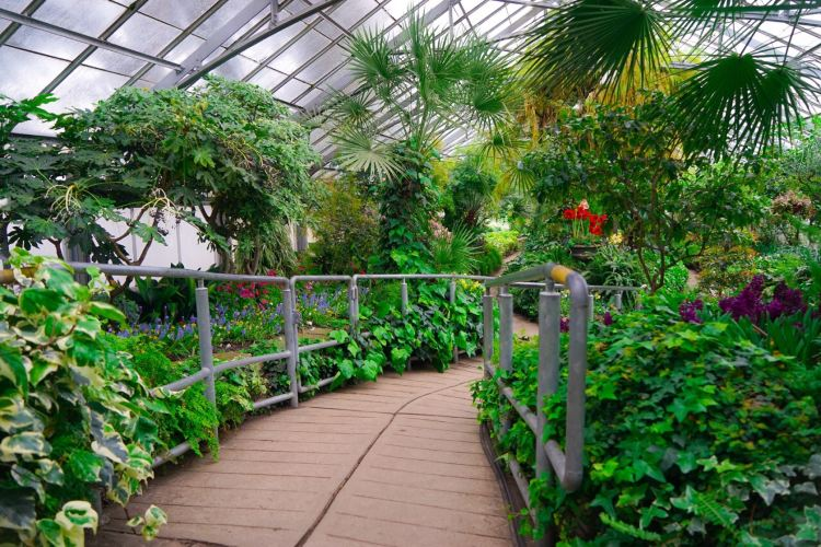 Allan Gardens Conservatory3