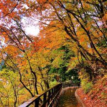 秋田县图片