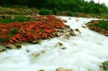 #元旦去哪玩#红石滩,生命与自然相融共存的奇特景观!