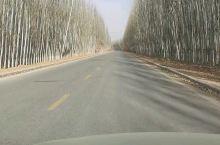 路边笔直的杨树…