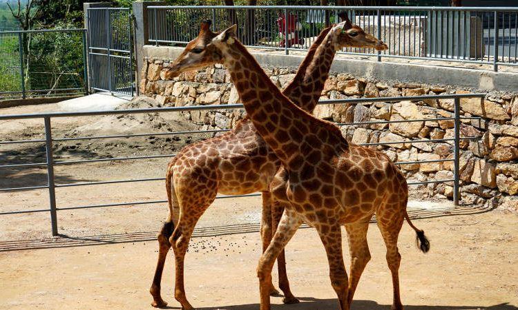 Feizhou Zoo2