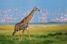 坦桑旅行全攻略 | 看完这篇,玩转坦桑全境国家公园!