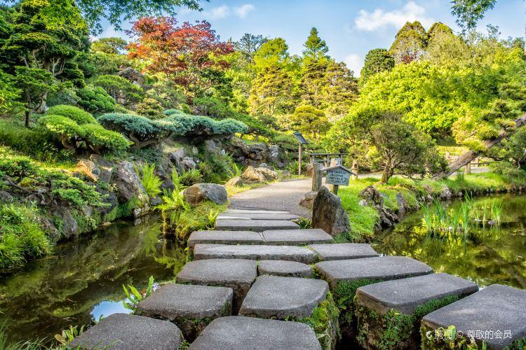 日本茶園3