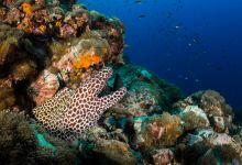 苏梅岛跳岛潜水3日游