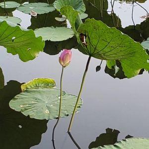 荔湾湖公园旅游景点攻略图