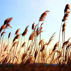 合阳游记图文-诗韵洽川 | 秋意渐浓,秋色正美,诗画里的小江南