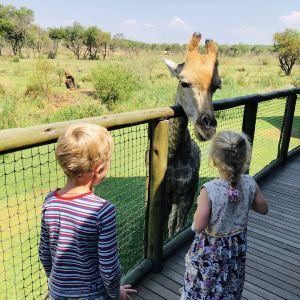 约翰内斯堡动物园旅游景点攻略图