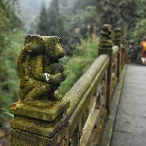 峨眉山生态猴区旅游景点攻略图