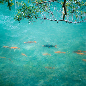 温州游记图文-浙里文成,伯温故里,畅享一场山水与文化交融之旅!