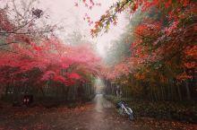 去梅岭古道看一场秋雾