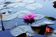 【老挝泰国旅行】2020新年第一场旅行:老挝泰美奇境之旅Day3 红莲花海