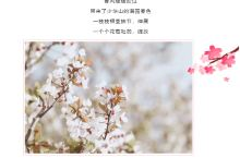 春风十里,不如在少华山的花海遇见你!
