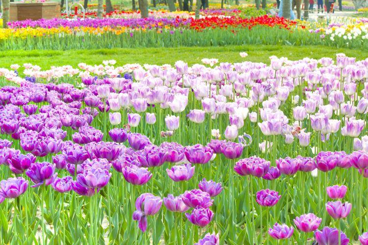 Shijiazhuang Botanical Garden