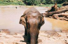 大象孤儿院,大象洗澡