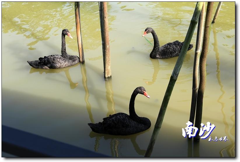 广州去南沙湿地公园_2019南沙水鸟世界生态公园-旅游攻略-门票-地址-问答-游记点评 ...