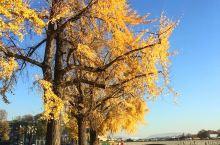 每周二在阿诺河边有个阳光灿烂的市集