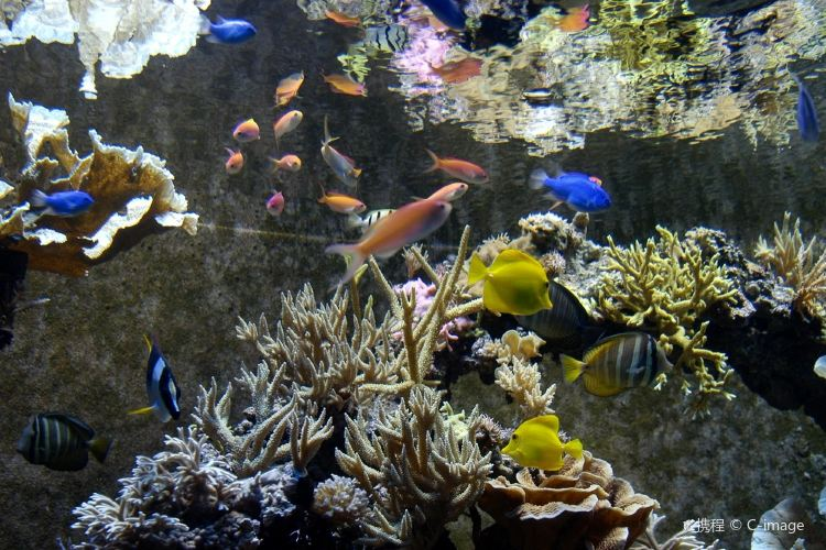 SeaWorld Orlando3