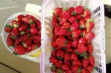 摘草莓的时候到啦