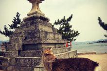嚴島神社鹿群