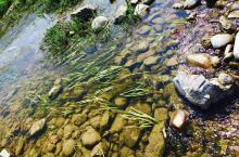 鹤壁淇河湿地公园