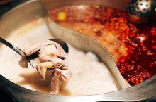 奢华环境里的猪肚鸡锅