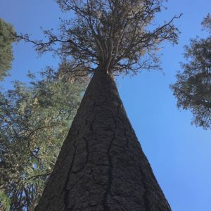 马里波萨谷巨杉林旅游景点攻略图