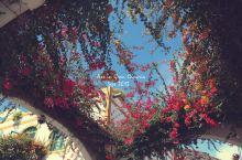 摩根小港, 那些花儿