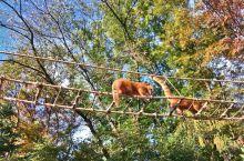 动物园运营的典范 爱宝乐园的动物世界